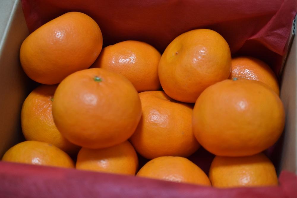 佐賀県産オレンジ『はまさき』を会社からいただきました!